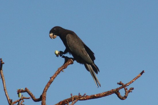 Anjajavy L'Hotel: Black Parrot