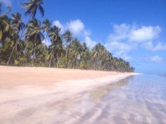 Japaratinga Beach: Vista paradisíaca