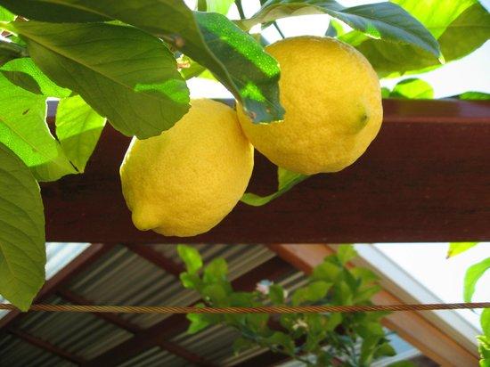 Cafe Boranup: Large Lemons in the front