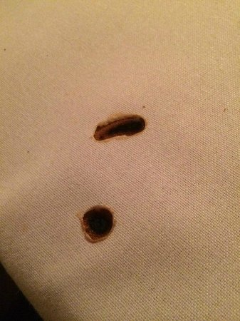 Tony Angello's Restaurant: Sparkler burned holes right through the table cloth. SO glad this was not my arm!