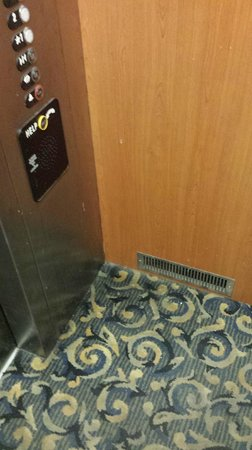 Supreme Inn & Suites - St James / Donaldsonville: Elevator Filth - Was never cleaned