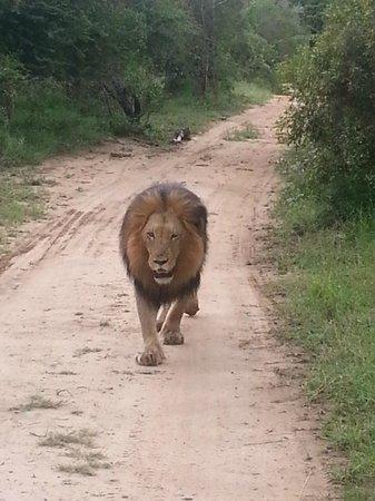 Kapama Southern Camp: safari