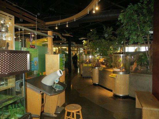 ECHO Leahy Center for Lake Champlain: Vue intérieur de l'aquarium