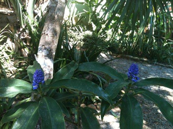 Pousada Aguas Claras Buzios: Jardim