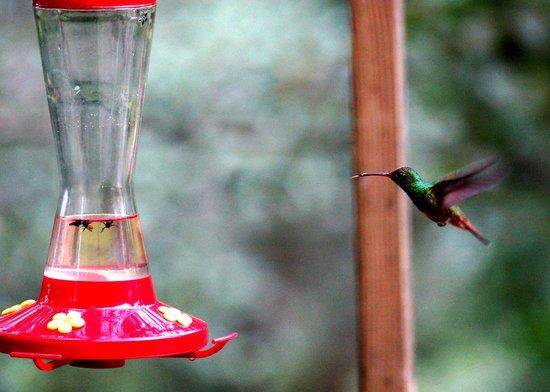 Crystal Paradise Resort: Hummingbird taken from diner area