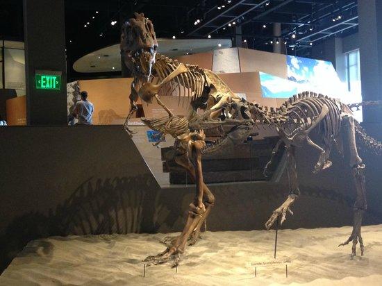 Dinosaurs picture of natural history museum of utah Dinosaur museum ohio
