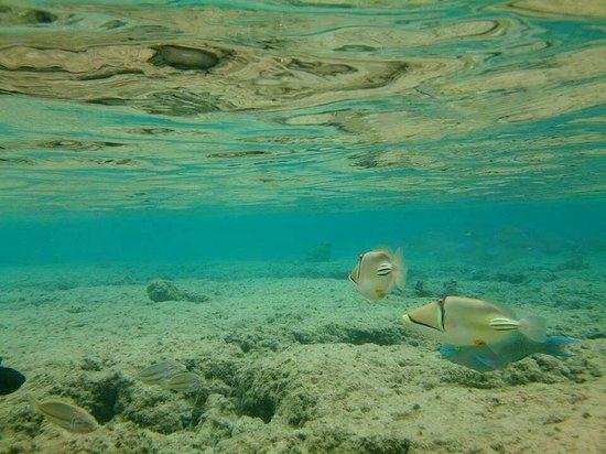 Underwater picture 20ft into the sea