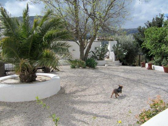 Cortijo Los Lobos: Our courtyard