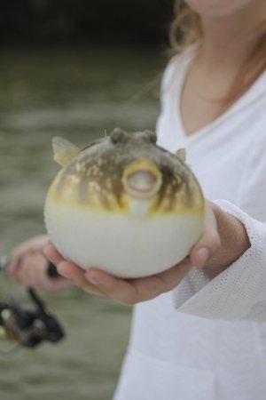 Captain Rapps, LLC - Fishing Charters: Pufferfish