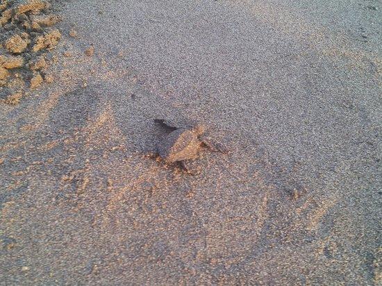 Casa Magna Marriott Puerto Vallarta Resort & Spa: Tortoise