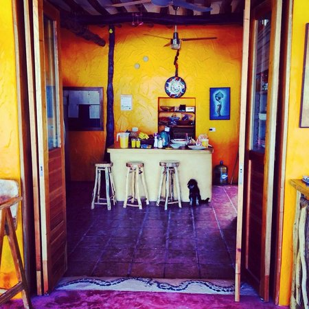 Hotel Casa Palapas del Sol: Home away from home, puppy included.  This kitchen produces truly delicious meals.