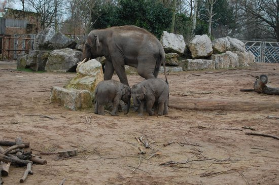 Chester Zoo: They look pretty content.