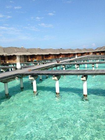 Maafushivaru: Beach Villas