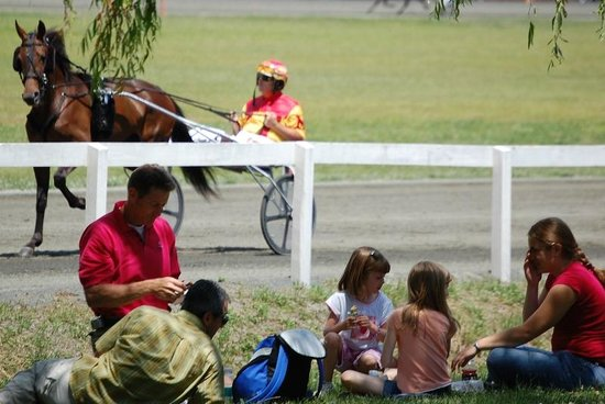 Goshen, NY: horses at the track next door to the Museum