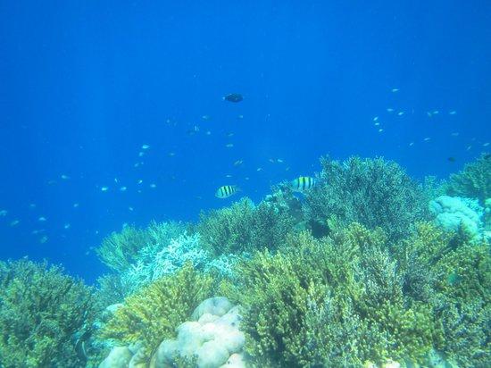 Villa Agung Beach Inn : Marine Park