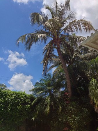 La Casa Hotel : Blue skies and palm trees in the courtyard.