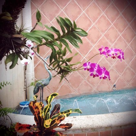 La Casa Hotel: Flowers in the courtyard.