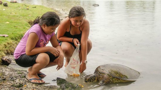 Swimming with Turtles: Malua turtle visit.