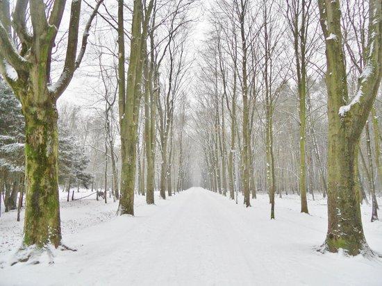 Stadtwald Bocholt
