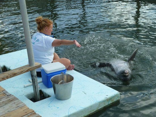 Dolphin Research Center: A researcher that we spoke to who was working with one of the dolphins.