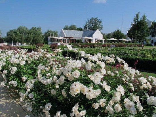 Kievits Kroon: Vue parc