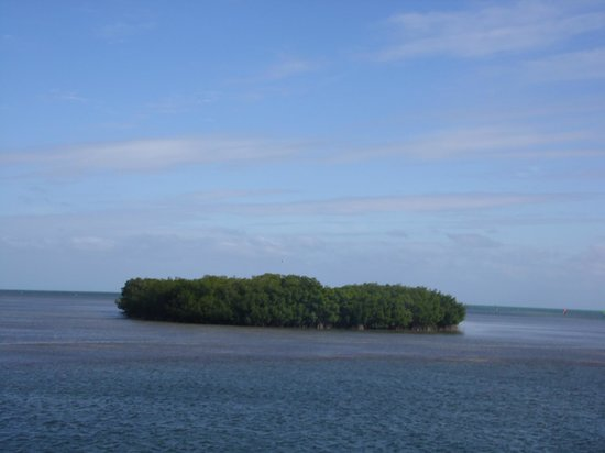 John Pennekamp Coral Reef State Park : One of the mini islands in the ocean on the boat trip