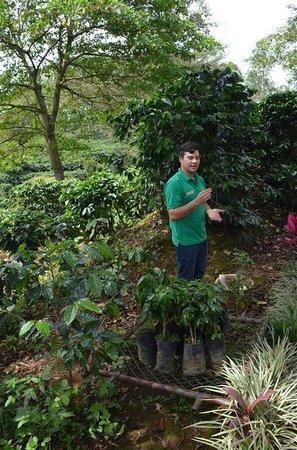 Espiritu Santo Coffee Tour: Our guide