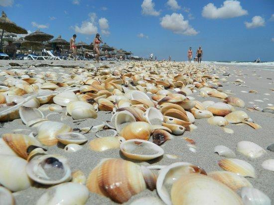 Mahdia Palace Thalasso : Sandy beach and shells