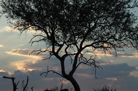 Madikwe Hills Private Game Lodge: Sunset Drinks
