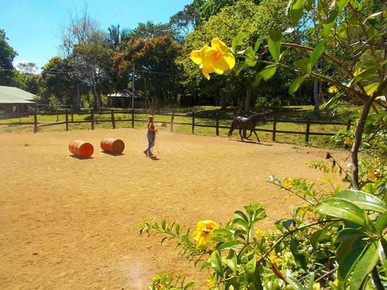 Establo San Rafael B&B: Brenda doing some Liberty work with Gusty