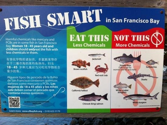 Embassy Suites by Hilton Hotel San Francisco Airport (SFO) - Waterfront: fishing is ok