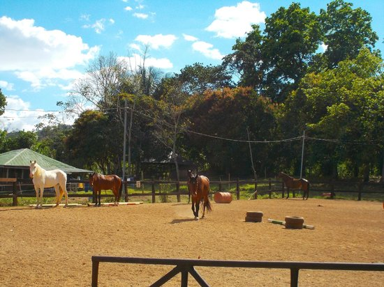 Establo San Rafael B&B: Happy horses in the ring