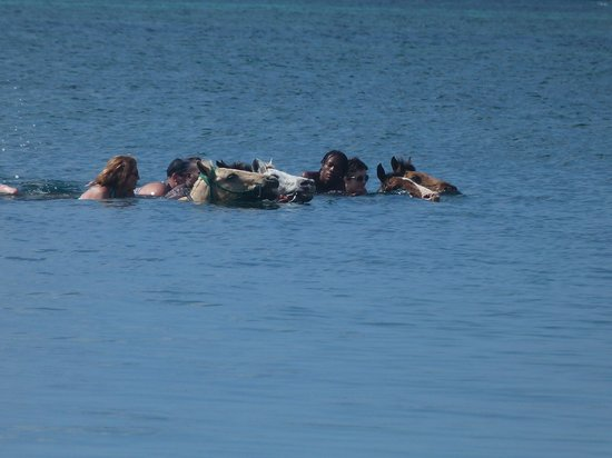 Rhodes Beach Resort Negril: Swimming with horses
