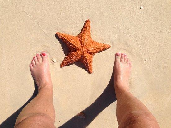 Rhodes Beach Resort Negril: Starfish found on the beach