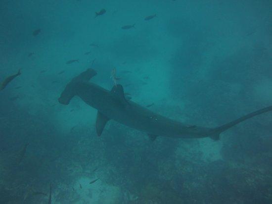 Royal Palm Hotel Galapagos: Hammerhead
