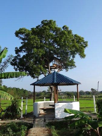 The Hideout Sigiriya: petite cabane pour observer les oiseaux
