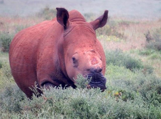Kariega Game Reserve: courageous Thandi - who survived horrible poachers