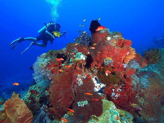 Amed Dive Center: amed seascape