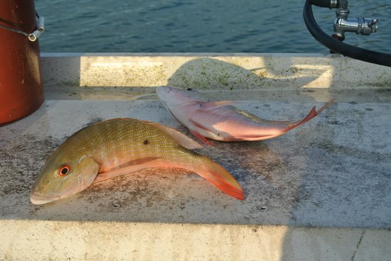 Rock Reef Resort: Couple of snappers for the grill