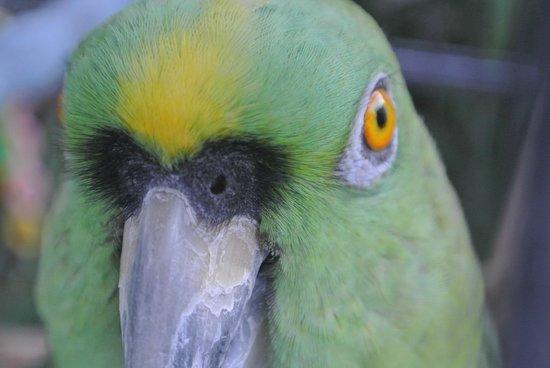 Rock Reef Resort: Bogie the parrot