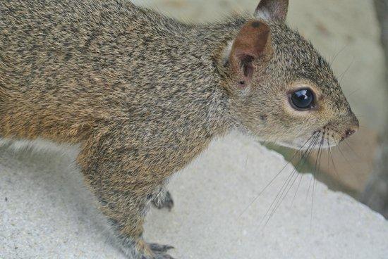 Rock Reef Resort: Squirrels everywhere