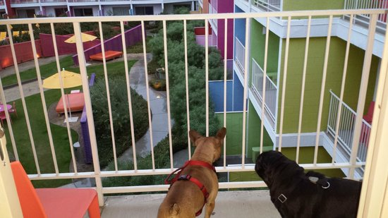 The Saguaro Palm Springs: Doggies overlooking the balcony