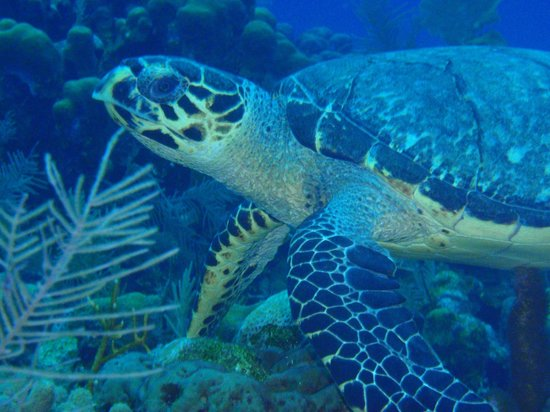 Roatan Backpackers' Hostel: turtle