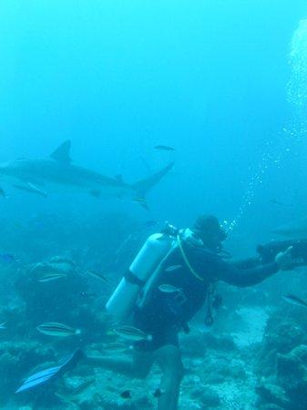 Roatan Backpackers' Hostel: sharks
