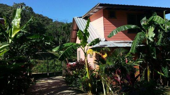 Roatan Backpackers' Hostel: hostel accomodment