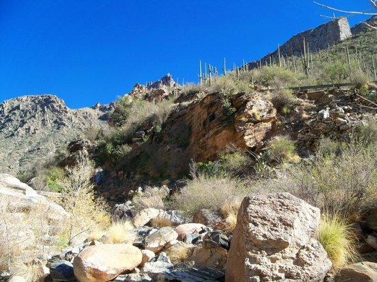 Sabino Canyon: Great canyon views