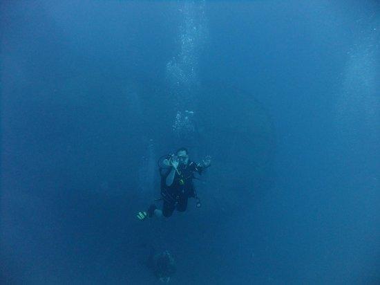 Elite Diving : The Thislegorm looming