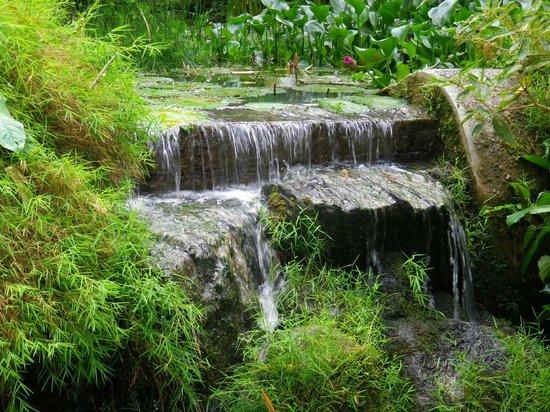 Tropical Spice Garden: gardens