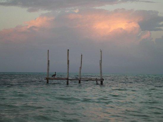 Isla Marisol Resort: Pelican sunset