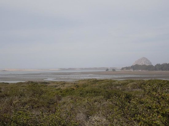 Elfin Forest Preserve: Taken from Bush Lupine Point. Morro Rock in Distance